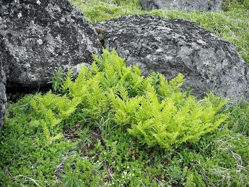 Gallery alpine tundra plants