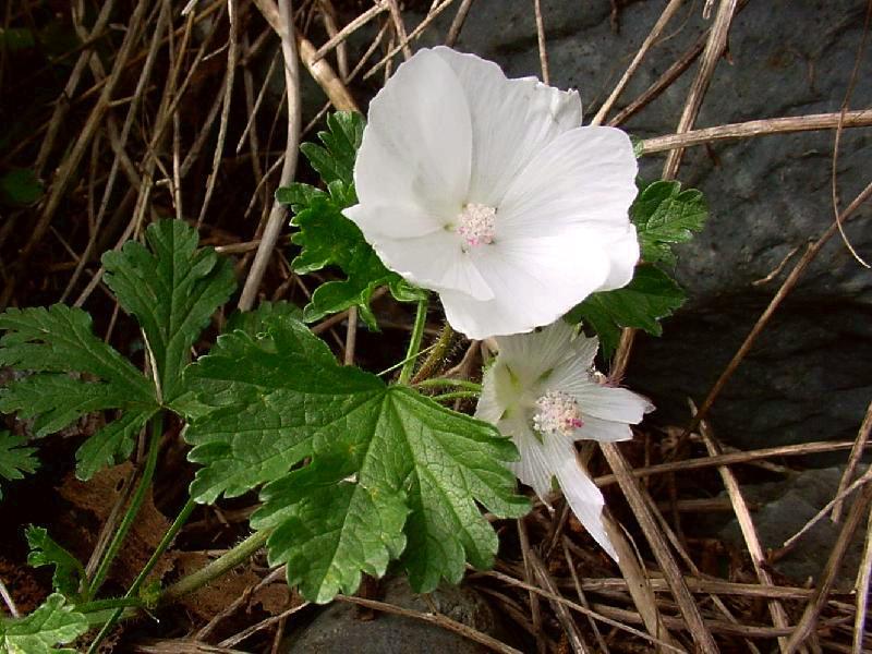 Digital Flora of Newfo...